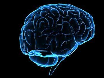 Sibutramine Brain
